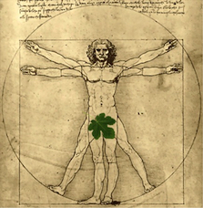 vitruvian with leaf